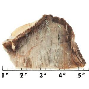 Slab1538 - Opalized Wood Slab