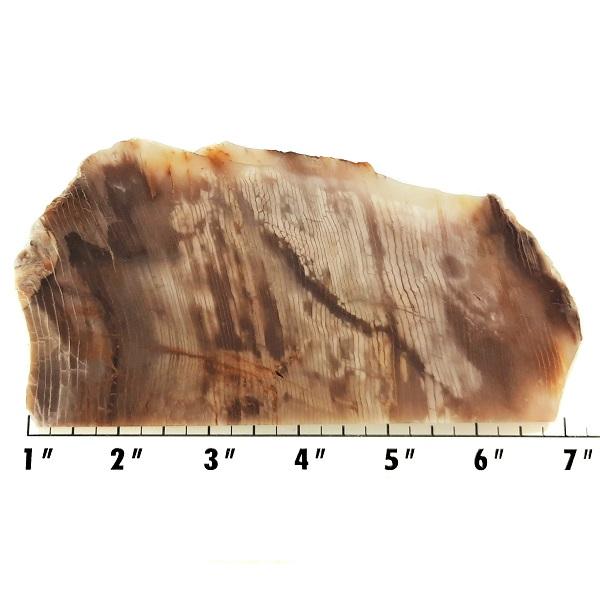 Slab1527 - Opalized Wood Slab