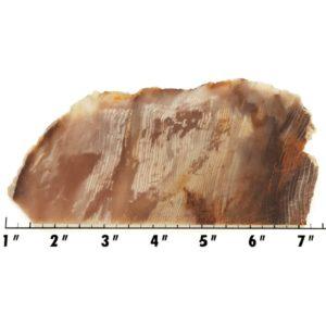 Slab1528 - Opalized Wood Slab