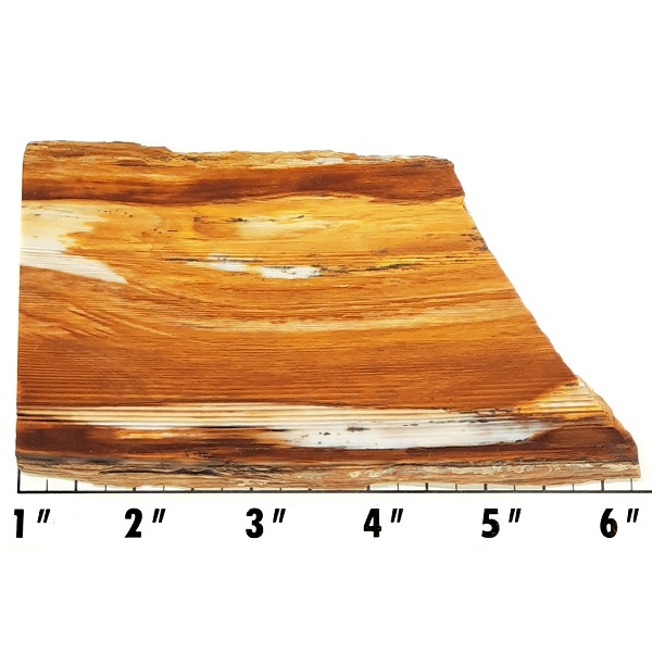 Slab1530 - Opalized Wood Slab
