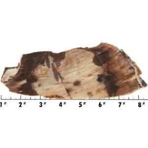 Slab1534 - Opalized Wood Slab