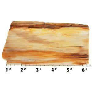 Slab1537 - Opalized Wood End Cut Slab