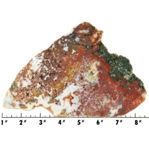 Slab255 - Ocean Jasper Slab