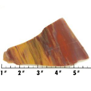 Slab556 - Petrified Rainbow Wood Slab