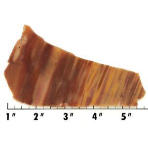 Slab560 - Petrified Rainbow Wood Slab