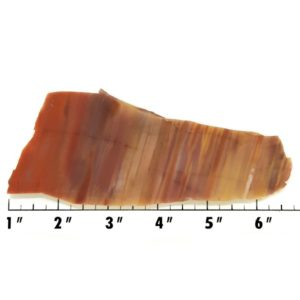 Slab575 - Petrified Rainbow Wood Slab