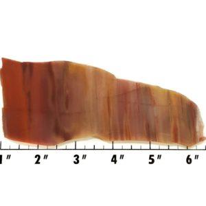 Slab579 - Petrified Rainbow Wood Slab