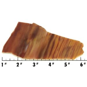Slab592 - Petrified Rainbow Wood Slab