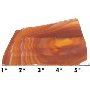Slab929 - Wonderstone Rhyolite Slab