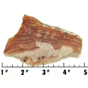 Slab139 - Sagenite Agate End Cut Slab