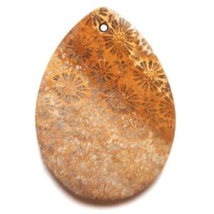 Fossil Coral Drilled Pendant #174