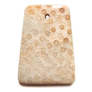 Fossil Coral Drilled Pendant #2