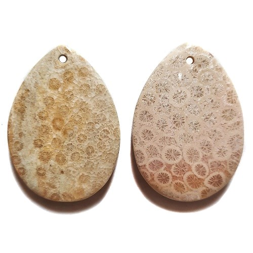 Fossil Coral Drilled Pendants #136