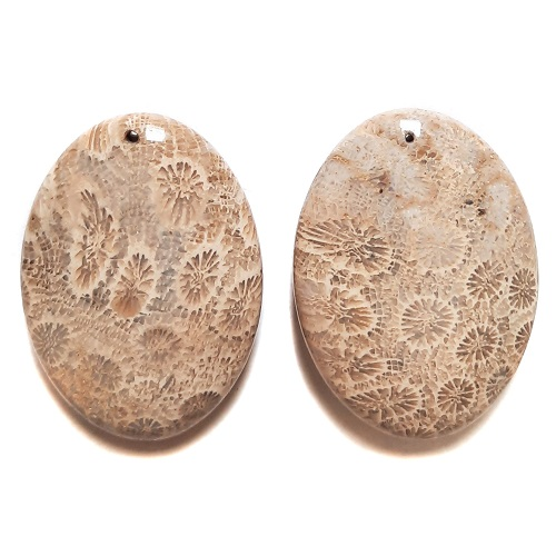 Fossil Coral Drilled Pendants #528