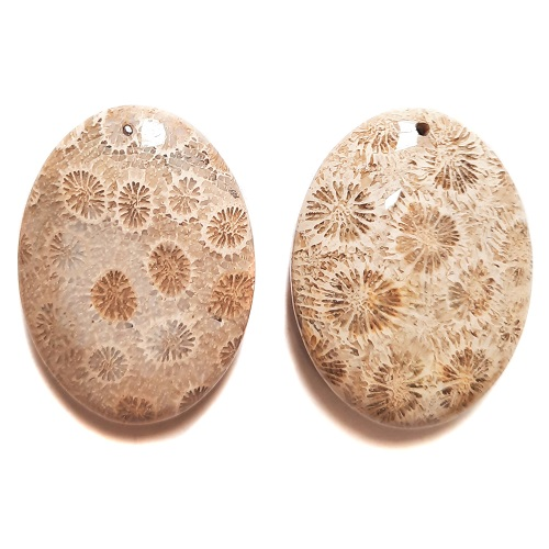 Fossil Coral Drilled Pendants #534
