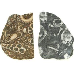 Crawstone Slabs from Baja California