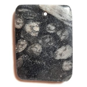 Fossil Stone Drilled Pendant #348