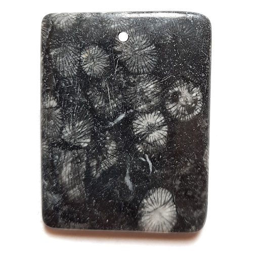 Fossil Stone Drilled Pendant #350