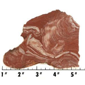 Slab1467 - Fossil Stromatolite Slab