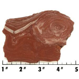 Slab1492 - Fossil Stromatolite Slab