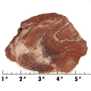 Slab142 - Fossil Stromatolite Slab