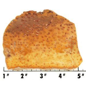 Slab1034 - Petrified Palm Slab