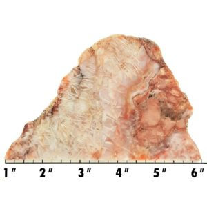 Slab128 - Sagenite Agate Slab