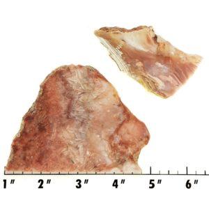 Slab1377 - Sagenite Agate Slabs