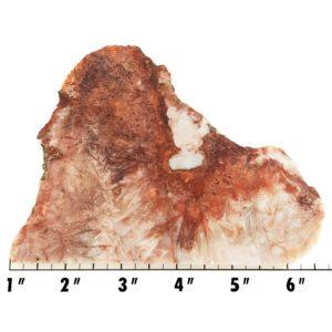 Slab1284 - Sagenite Agate Slab