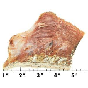 Slab1289 - Sagenite Agate Slab