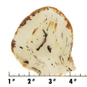 Slab216 - Montana Agate Slab